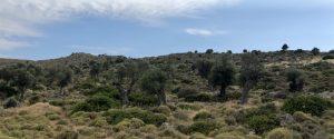 2 - Gaj oliwny